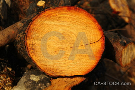 Javea texture europe wood circle.