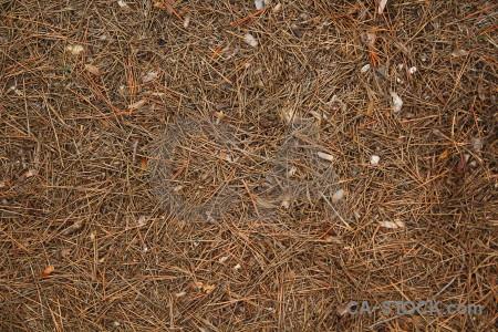 Javea texture spain pine needle europe.