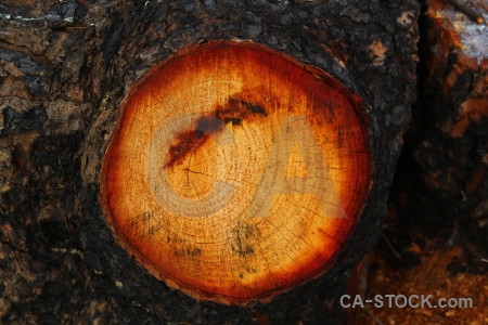 Javea texture wood log circle.