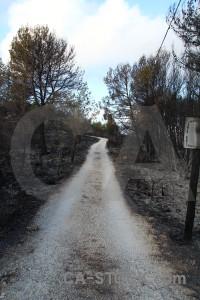Javea tree burnt ash montgo fire.