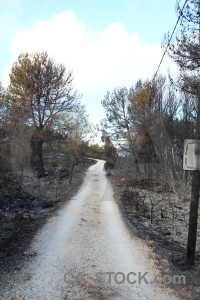 Javea tree europe path burnt.