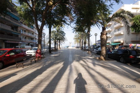 Javea tree europe shadow spain.