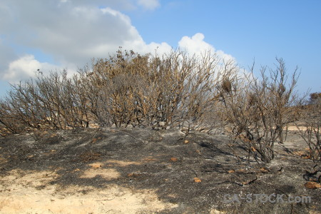Javea tree spain montgo fire burnt.