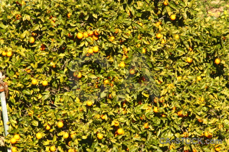 Javea tree texture spain leaf.