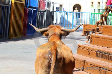 Javea white horn bull orange.