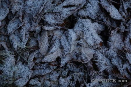 Karlskrona leaf frost sweden europe.