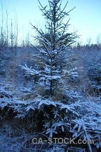 Karlskrona sweden tree frost europe.