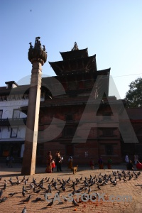 Kathmandu buddhist unesco bird nepal.