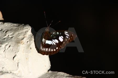 Kbal spien butterfly cambodia rock stone.