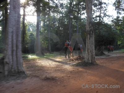 Khmer sand buddhism tree cambodia.