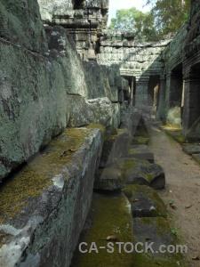 Khmer stone southeast asia moss lichen.