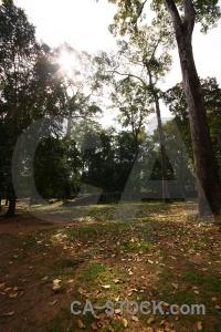Khmer unesco lichen temple southeast asia.
