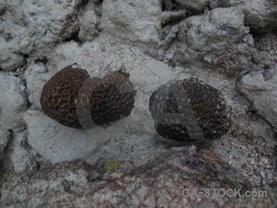Ko phi ley leh coral island maya bay.