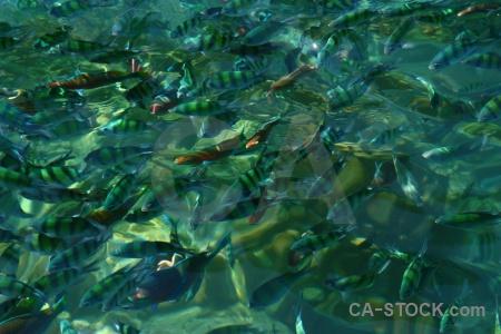 Koh yung thailand mosquito island ko fish.