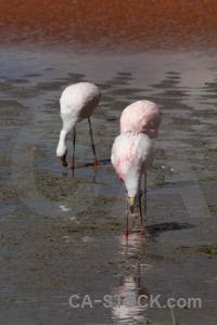 Lake animal andes altitude bird.