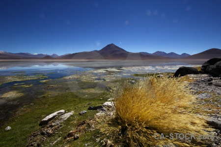 Lake bolivia plant andes south america.