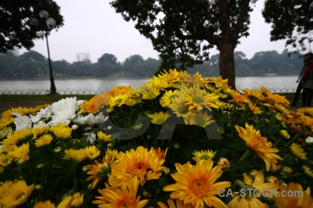 Lake southeast asia water hoan kiem lake flower.