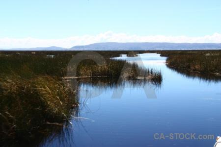 Lake titicaca altitude uros puno plant.