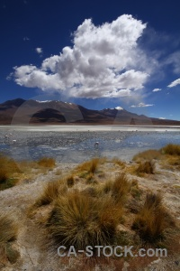 Landscape animal laguna hedionda salt lake south america.