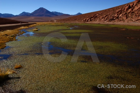 Landscape chile rock grass pond weed.