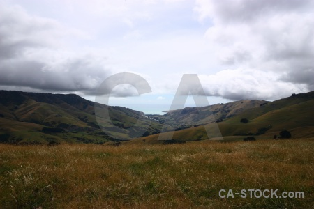 Landscape cloud bush new zealand grass.
