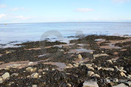 Landscape coast seaweed rock.