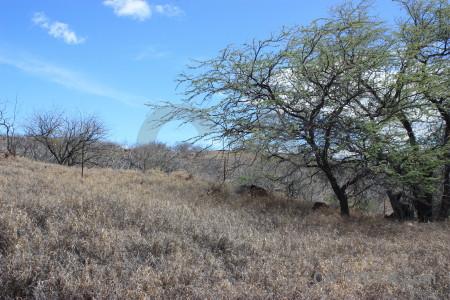 Landscape desert blue.