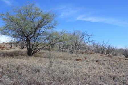 Landscape desert blue tree.