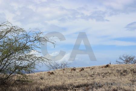 Landscape desert tree white.