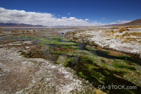 Landscape grass lake plant south america.
