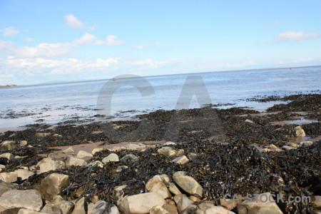 Landscape rock seaweed coast.