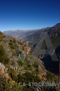 Landscape south america colca canyon bush andes.