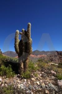 Landscape south america tilcara argentina salta tour.