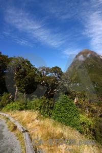 Landscape tree south island mountain cloud.
