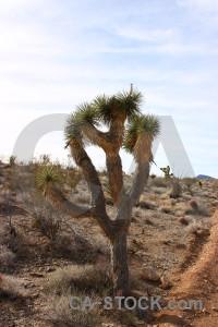 Landscape tree white brown desert.
