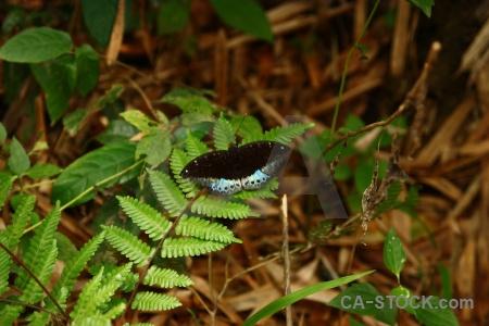 Laos leaf animal southeast asia luang prabang.