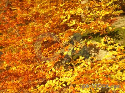 Leaf branch brown yellow orange.