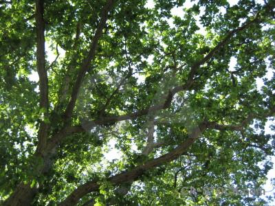 Leaf branch green tree.