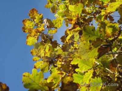 Leaf brown yellow branch blue.