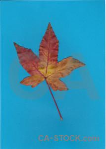 Leaf cyan.