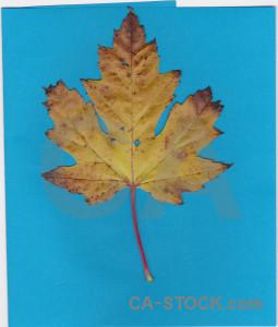 Leaf cyan orange.