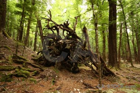 Leaf dead plant log stump.