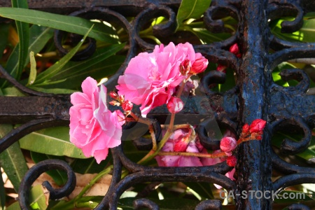 Leaf flower green red pink.