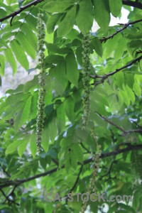Leaf green.