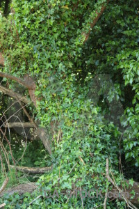 Leaf green branch tree.