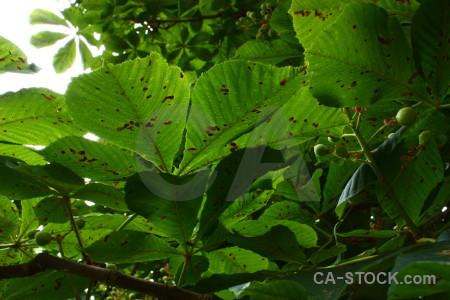 Leaf green plant.
