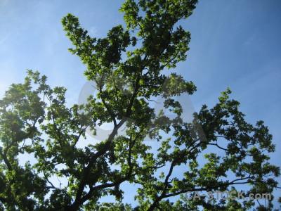 Leaf green tree branch blue.