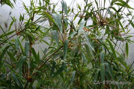 Leaf peru plant inca trail south america.