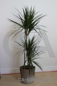 Leaf plant.
