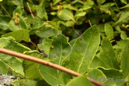 Leaf plant green.